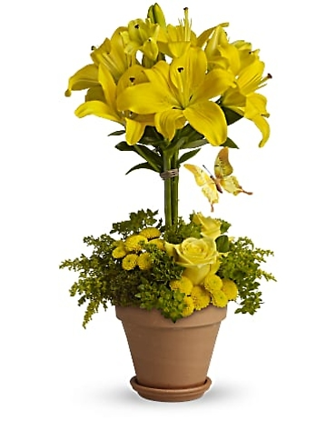 YELLOW LILY TOPIARY