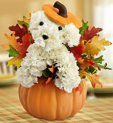 Adorable Puppy for Fall